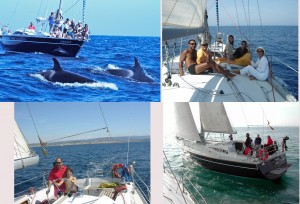 Whale and dolphin watching in sailingboat, sail thru The Straight of Gibraltar.